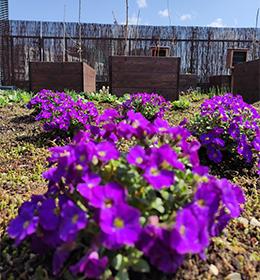 Uniwersytet Przyrodniczy w Lublinie i Waryński S.A. Grupa Holdingowa prowadzą działania na rzecz owadów zapylających
