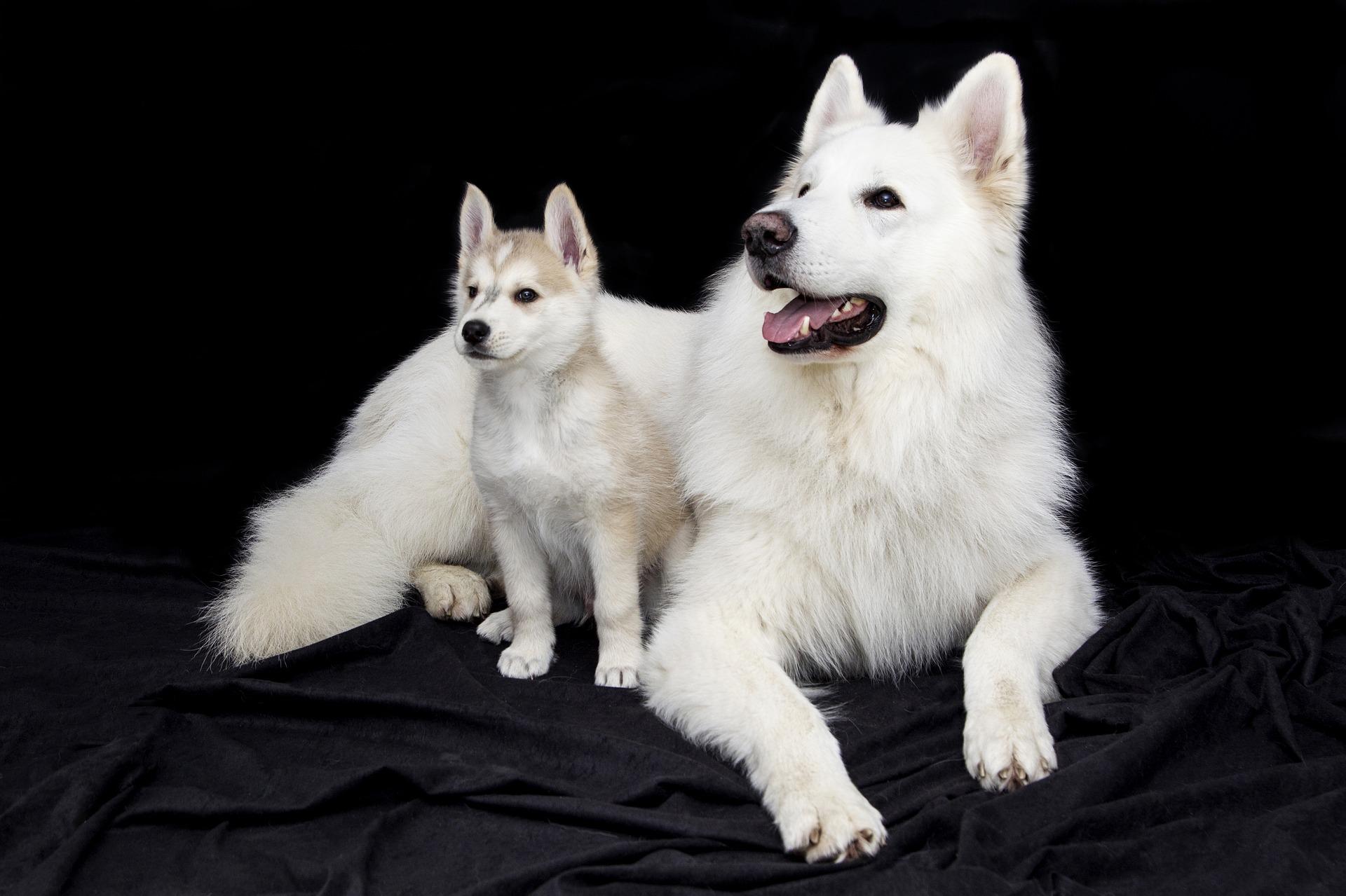 Prof. Brygida Ślaska o badaniach nad nowotworem sutka u psów